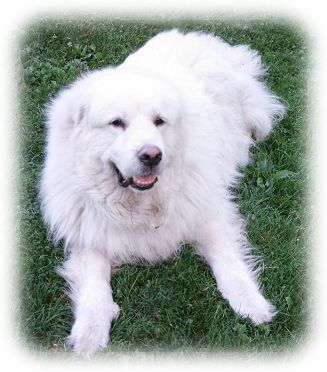 Is A Pyr For Me